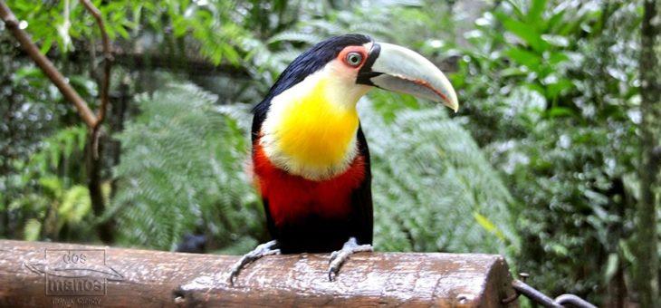 Reserva Nacional del Manu en el Amazonas del Perú